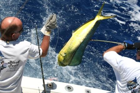 St croix usvi fishing regulations for Virgin islands fishing