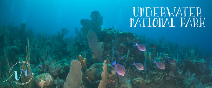 Underwater National Park in Trunk Bay